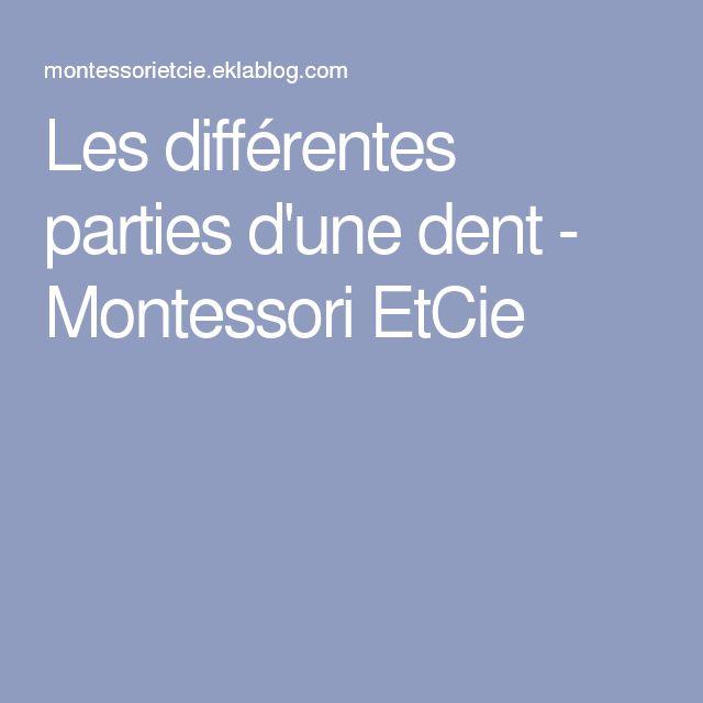 Les différentes parties d'une dent - Montessori EtCie
