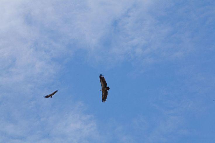 Vulture-01-MOP-1028x685