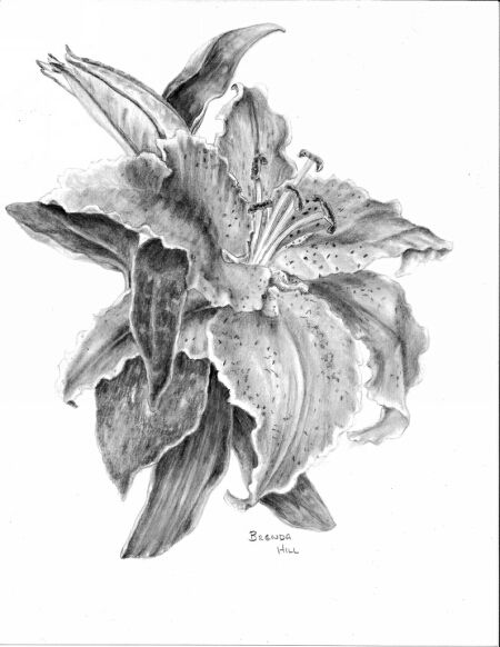 Lily graphite floral by Brenda Hill
