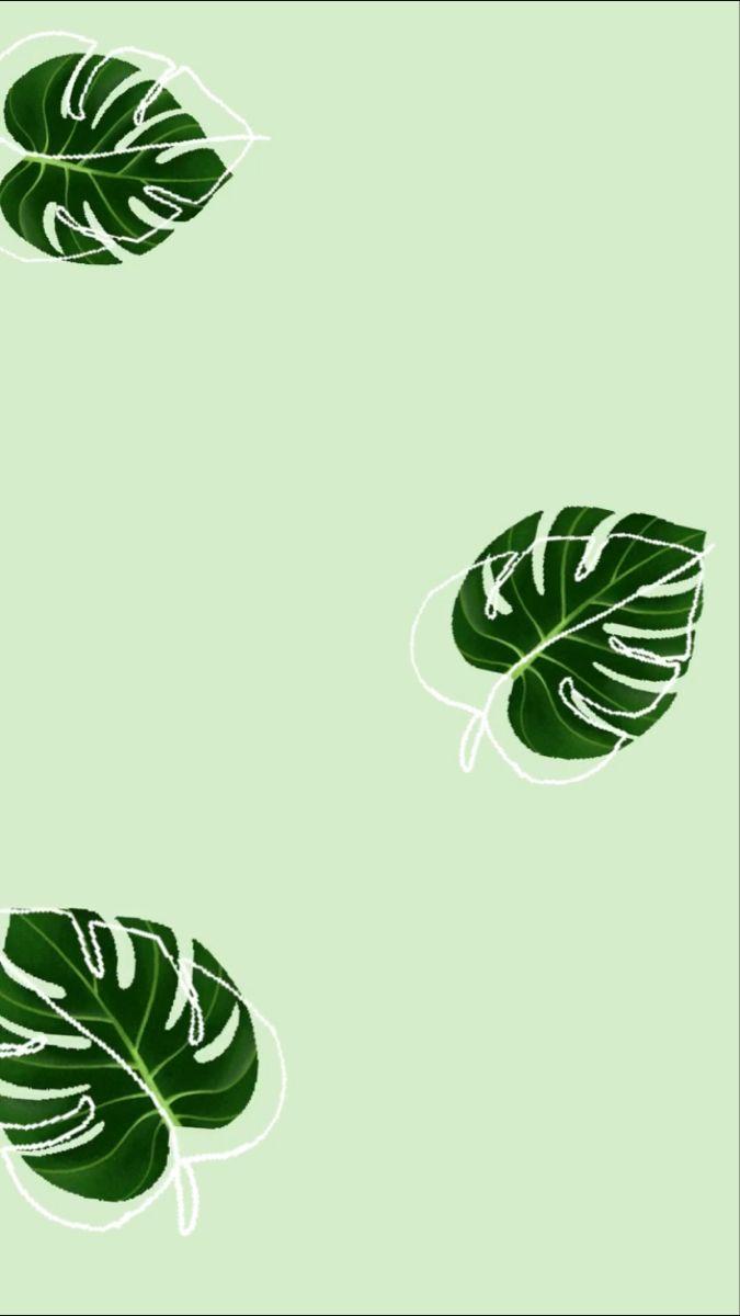 Wallpaper Iphone Wallpaper Green Leaves Wallpaper Iphone Mint Green Wallpaper Iphone