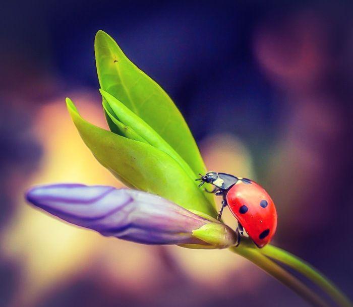Fotografia utilizatorului Ilies Gabriela din categoria Fotografia macro&close-up a fost realizata cu Nikon D3100