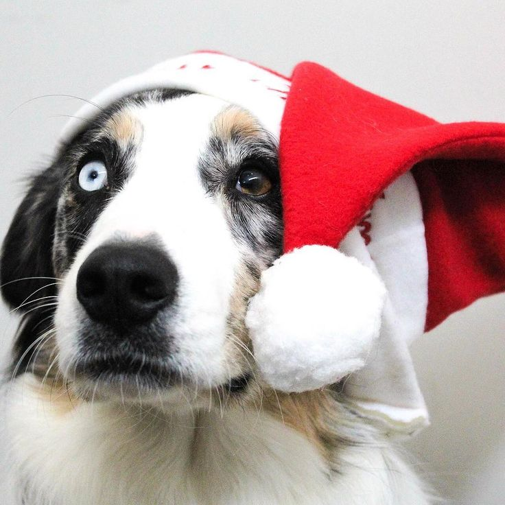 THE MEOWING VETS 2017 HOLIDAY GIFT GUIDE FOR PETS AND PET LOVERS  New Blog Post   Look no further! The ultimate holiday gift guide for pets and pet owners has arrived! The Meowing Vet has simplified your holiday season by making your shopping list for you. Youll be sure to find the perfect present for every dog cat and pet lover in your life. Visit www.themeowingvet.com to share our one-stop gift guide for all things pet-themed and follow us on Facebook and Instagram @themeowingvet!  (Click…