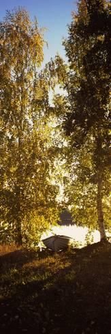 Trees at the Riverside at Dawn, Vuoksi River, Imatra, Finland Photographic Print