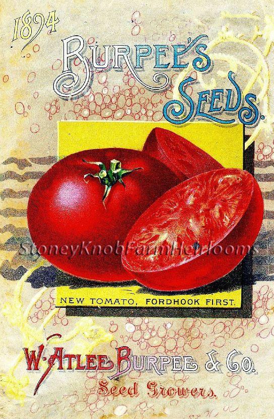 Burpee Seeds 1894 ~ Vintage Vegetable Catalog Art ~ Cross Stitch Pattern #StoneyKnobFarmHeirlooms #FramedPicture
