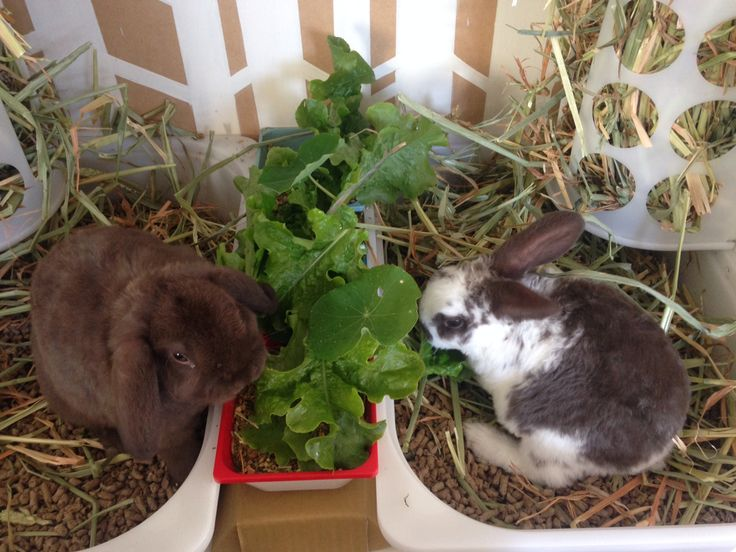 Bunnies brunching