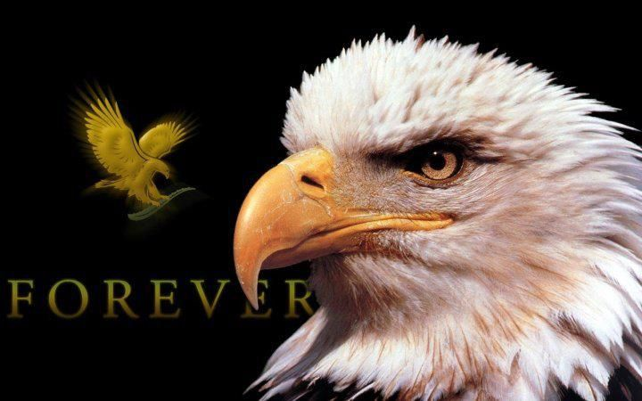 Forever Living Products, THE BEST health, wellbeing and skincare products available.  Online ordering go to www.purestartforever.myflpbiz.com.  Please visit and 'like' my Facebook page www.facebook.com/purestartforever