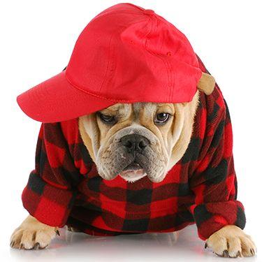 Prepara a tu perro para el invierno! Consulta en nuestra tienda Best for Pets el apartado de ropa para perros;)