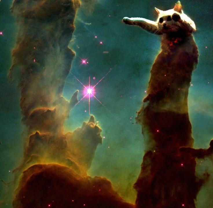 intergalactic cat | I ? cats | Pinterest