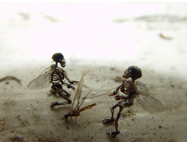 63 best folklore images on pinterest, Skeleton