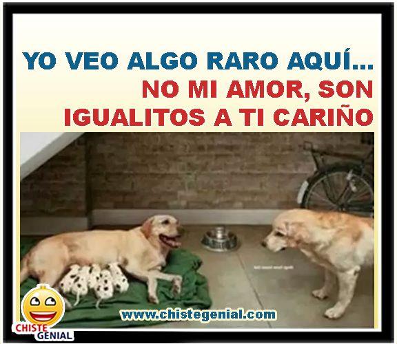 Yo Veo Algo Raro Aqui No Mi Amor Son Igualitos A Ti Chistes Graficos Graciosos Y Divertidos De Animales Infieles Humor Funny Memes