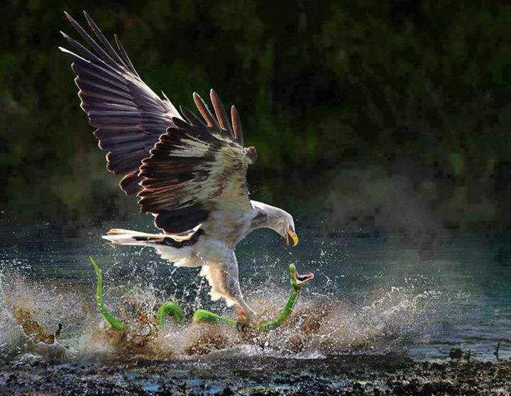 OK nature photographers, this is truly a once in a lifetime shot!