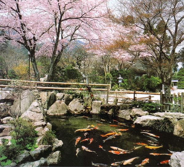7 best koi ponds images on pinterest japanese gardens for Nishinomiya tsutakawa japanese garden koi