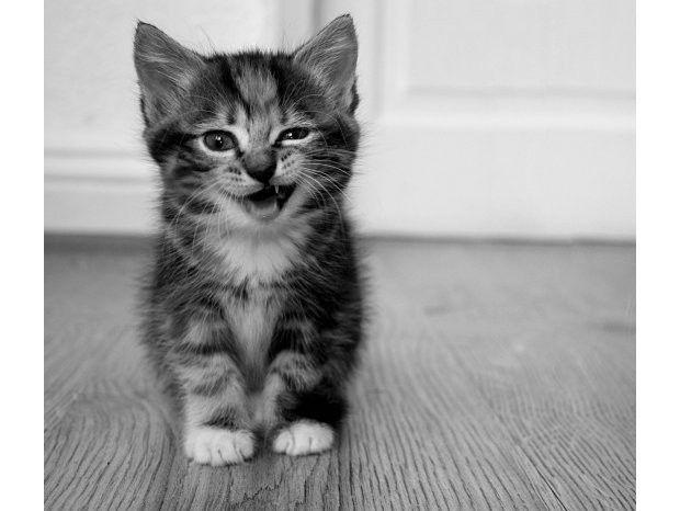 25 conseils de drague à piquer aux chats