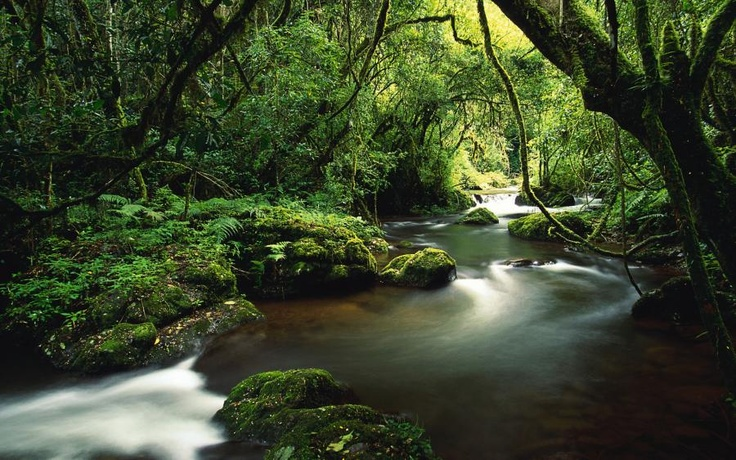 Forest river, mystery