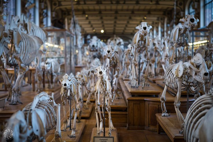 Oh No, Don't Look At Me In That Way (at the Muséum d'Histoire Naturelle in Paris)