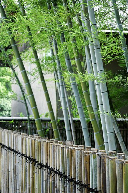 95 Best Bamboo Fences Images On Pinterest