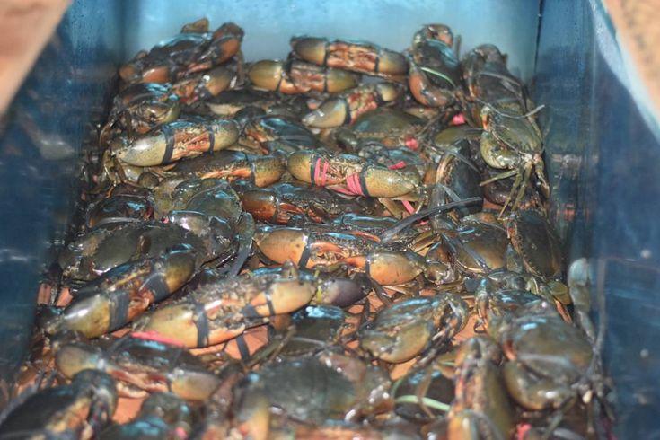 Dreams don't work unless you do. #crab #kepiting #kepitingjogja #instagood #instafood #foodgram #foodhunters #kulinerketapang #kulinerkalimantanbarat #kulinerjogja #kulinerjakarta #kulinerindonesia #surabaya #ketapang #pontianak #export #kalimantanbarat #seafood #seafoodkepiting #seafoodudang #photography #udang #udangwindu #blacktigerprawn #shrimp #prawn #whiteprawn #lobster #indonesia #bananaprawn #indonesia