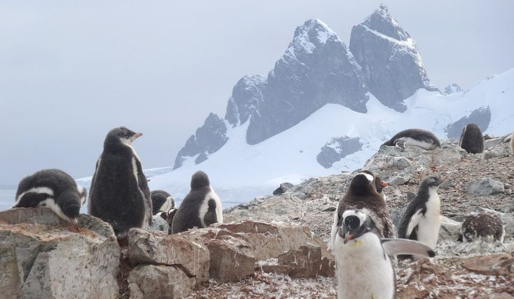 Penguin Stories of Antarctica - Surviving Petermann Island
