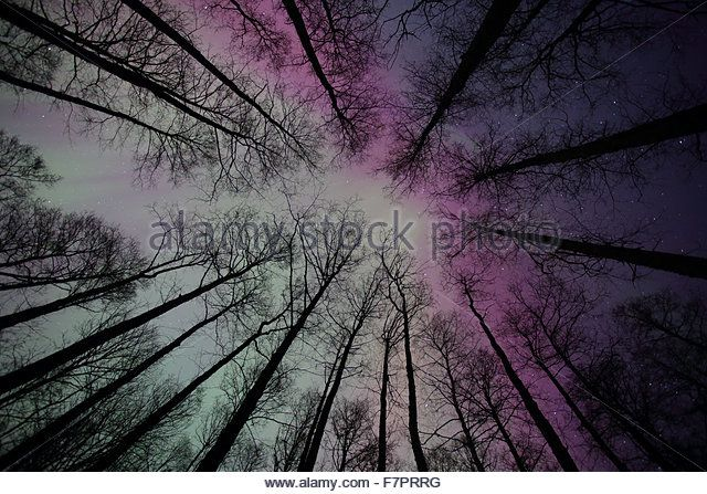 Northern lights (Aurora Borealis) in the sky. Europe - Stock Image