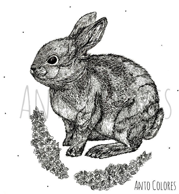 #rabbit #conejo #flores #flowers #illustration #ilustracion #antocolores  www.instagram.com/anto.colores https://www.facebook.com/AntoColores/?ref=aymt_homepage_panel