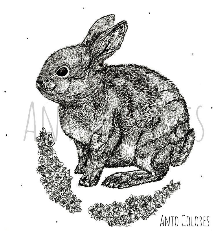 #rabbit #conejo #flores #flowers #illustration #ilustracion #antocolores  www.instagram.com/anto.colores https://www.facebook.com/AntoColores/?ref=aymt_homepage_panel