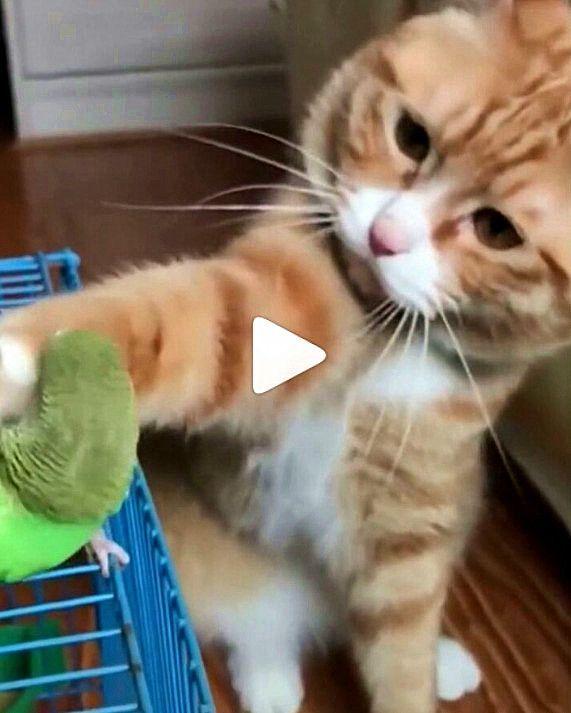 Was Fur Eine Sanfte Und Susse Ingwerkatze In 2020 Ingwer Katzen Susseste Haustiere Katzen