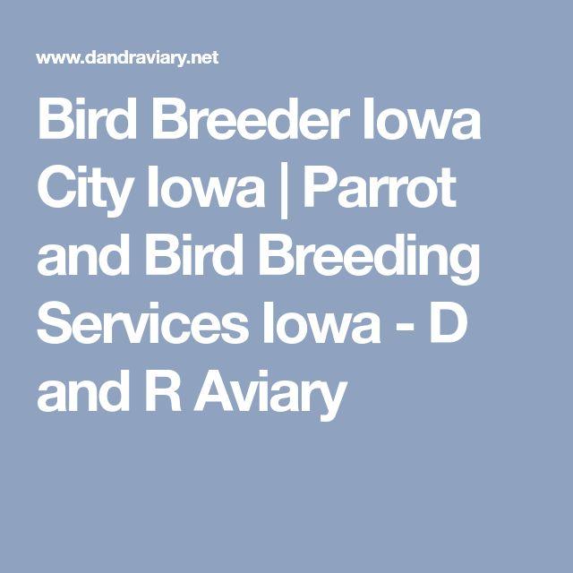 Bird Breeder Iowa City Iowa | Parrot and Bird Breeding Services Iowa - D and R Aviary