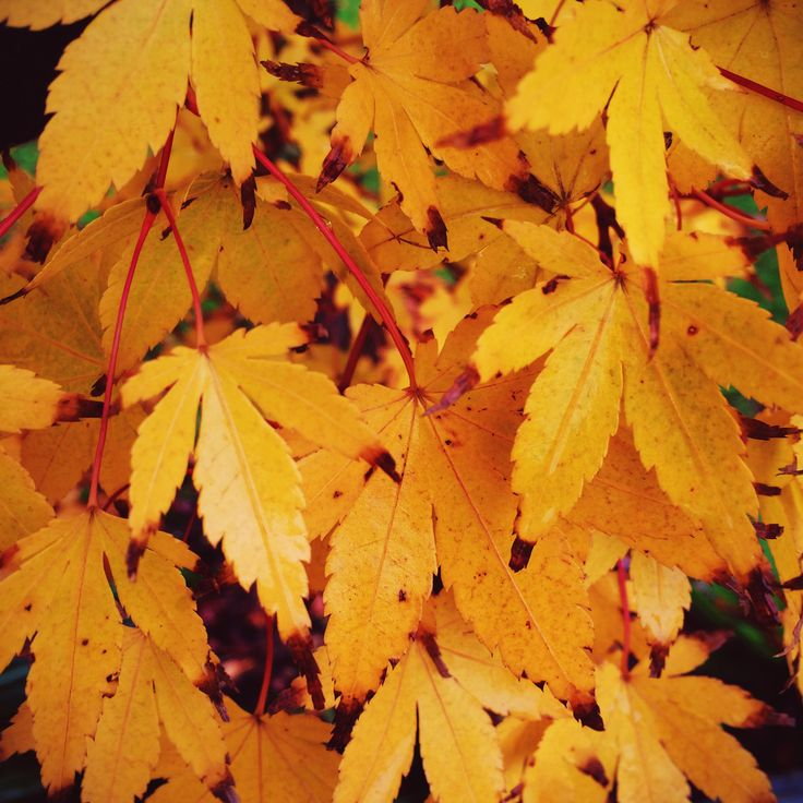 yellow autumn colours