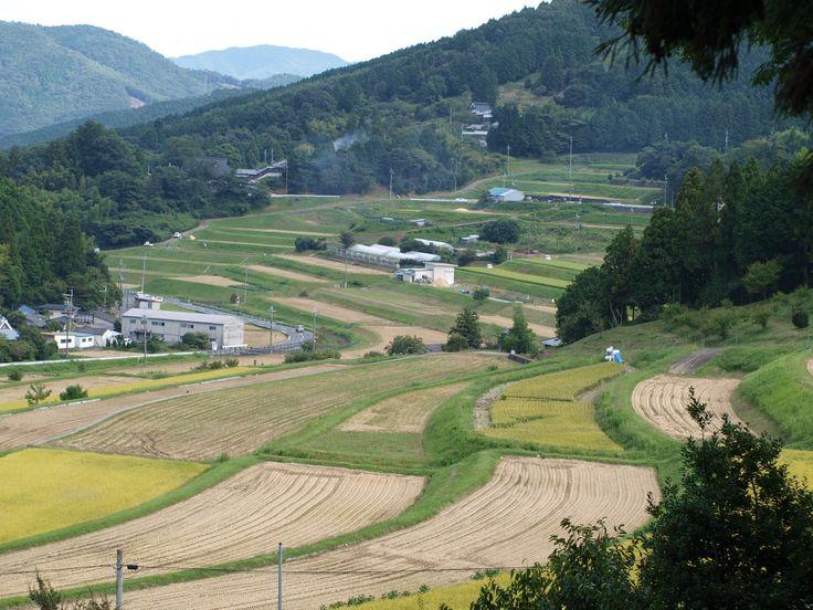 稲刈りあと:大阪府能勢町