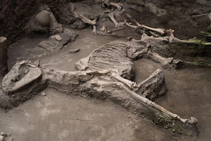Lo scheletro di un mulo ritrovato nella stalla della Casa dei Casti Amanti.   © Anna Monaco (@annafdf)