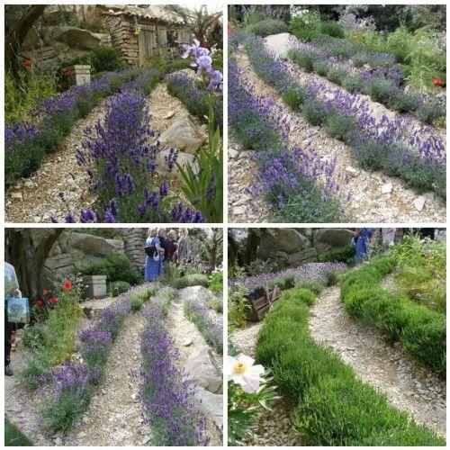 lovely lavender: Gardens Flowers, History, Finals, Exhibitions, Garden Delights, Chelsea Flower Show, Lavender Garden Chelsea, Garden Chelsea Flower, Flowers Etc