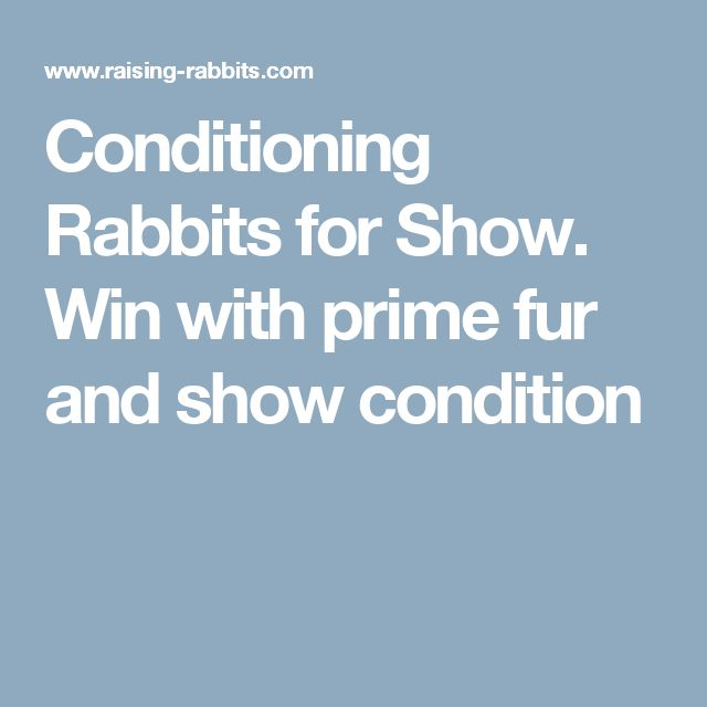 Conditioning Rabbits for Show. Win with prime fur and show condition