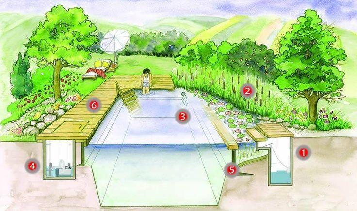 Las biopiletas están compuestas principalmente por: (1) Filtro grueso que mantiene automáticamente la superficie del agua limpia de hojas e impurezas flotantes. (2) Zona de filtración natural con plantas acuáticas. (3) Oxigenación del agua mediante burbujeadores. (4) Bomba de recirculación para evitar el estancamiento y descomposición de material orgánico (5) Pared sumergida que separa la zona de nado de la zona de plantas. (6) Deck  http://bit.ly/energizar-arqsust
