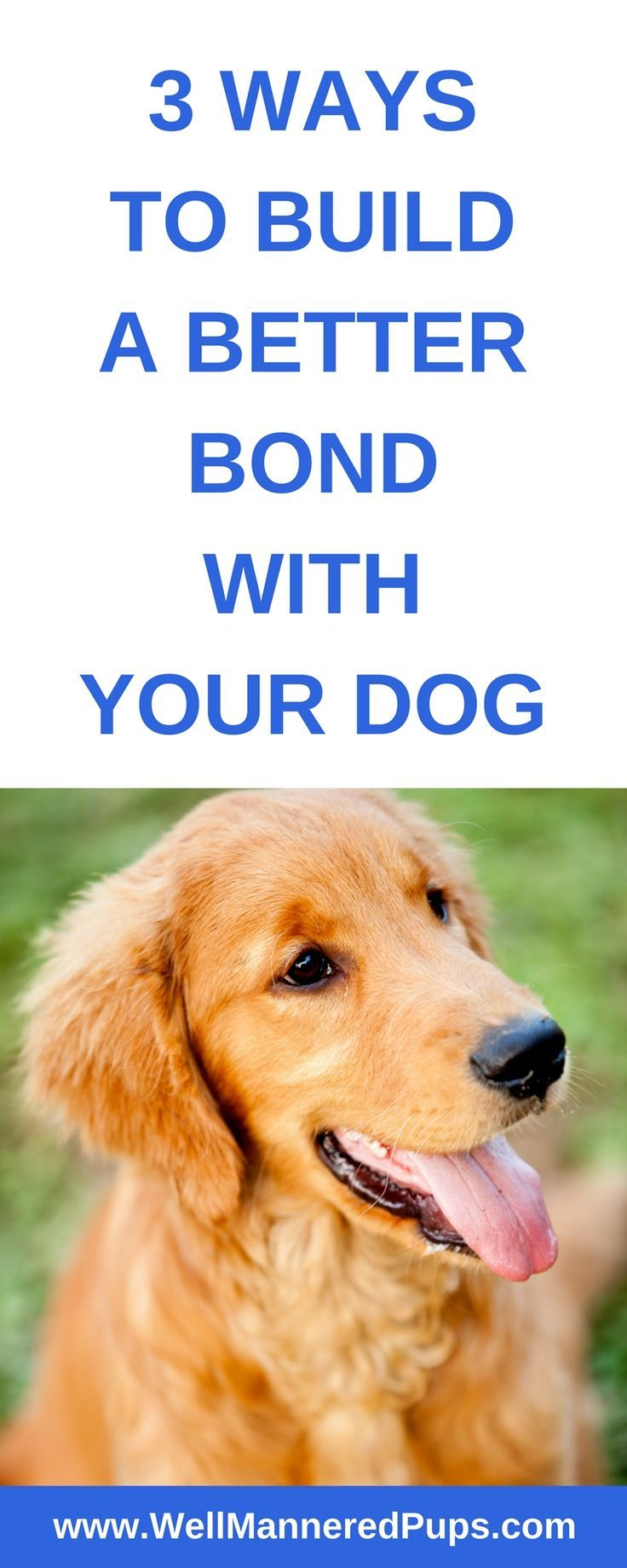 Three Ways To Have A Better Bond With Your Dog Training Your Dog