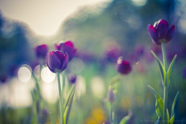 Vintage Tulips by Levente Bodo