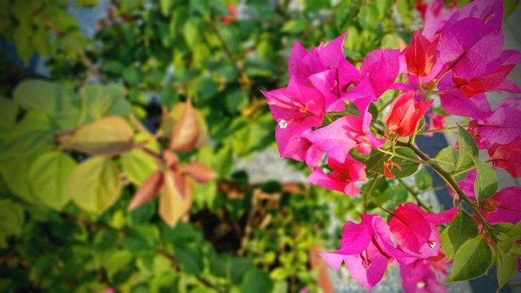#gardening hat_42_20190721152728_53    fall #gardening zone 7b, gardening ideas p…
