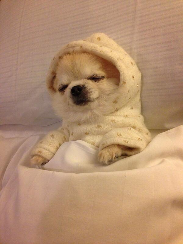 dog : おやすみ…