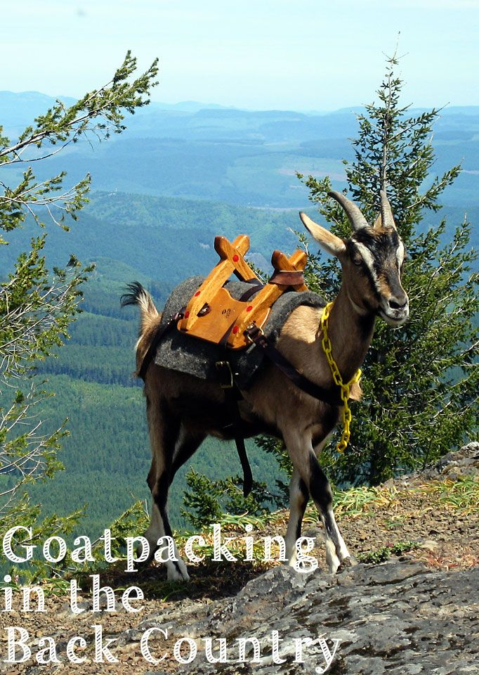 #goatvet likes this blog- Goatpacking in the Back Country