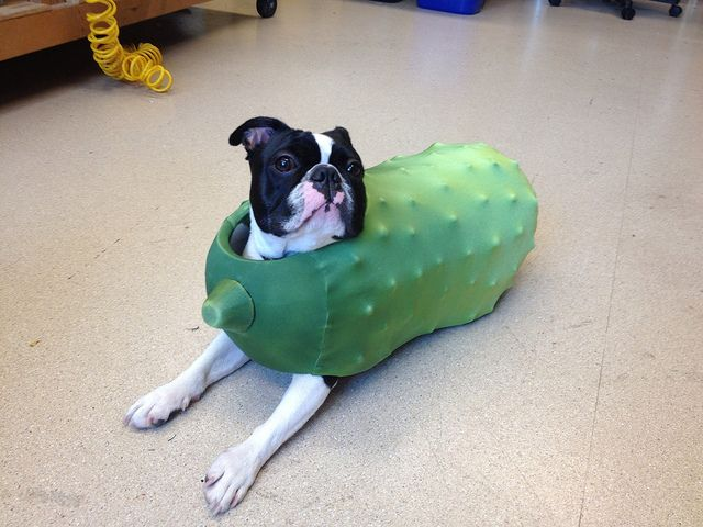 homemade pickle costume!