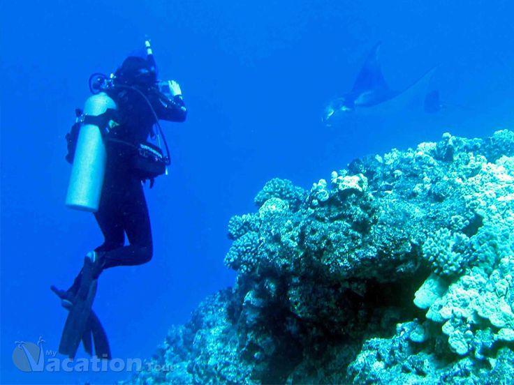 Hawaii Scuba Diving Hotspots