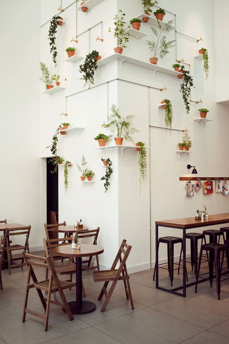 cafe #indoorplants #shelving