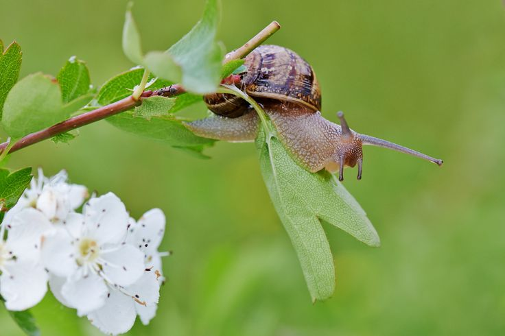 snail by Stefano Disperati on 500px