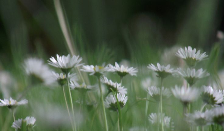 Summers meadow