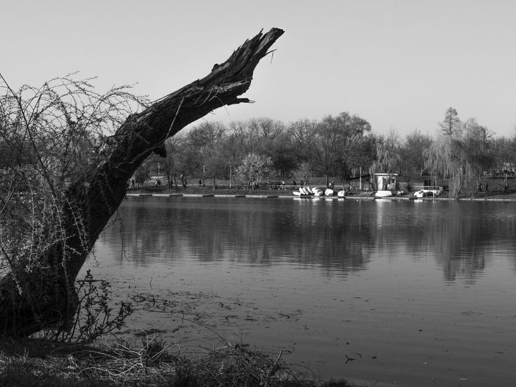 park, lake, trees, black and white, sky, reflections, water, willow, boats, marina