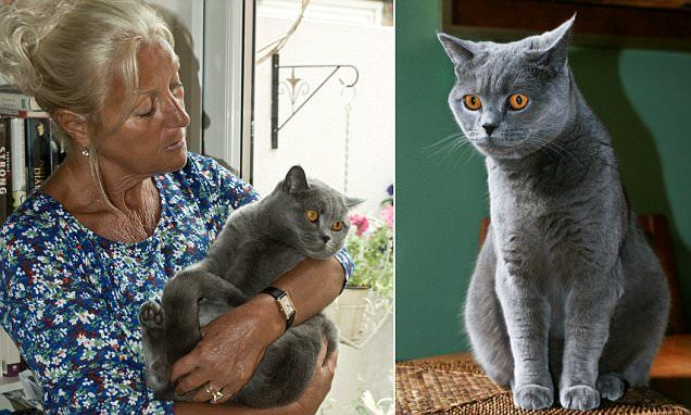 The pedigree cat held to ransom for £5,000 by East European gang