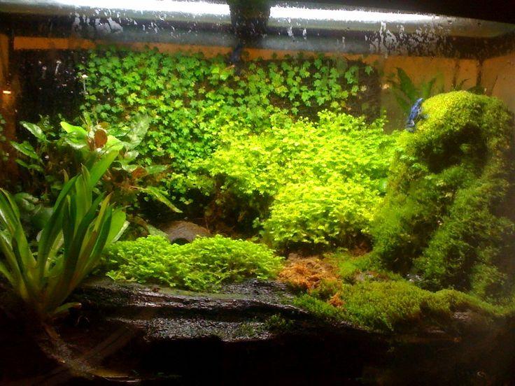 tree frog terrarium setup | Let's see those Frog and Toad Enclosures!-vivarium-1.jpg