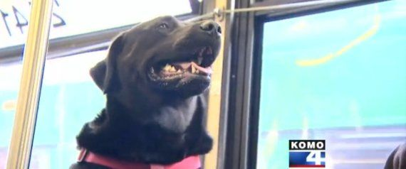 Sorry about the commercial before the video, bit the video is worth it. Seattle Dog Figures Out Buses, Starts Riding Solo To The Dog Park