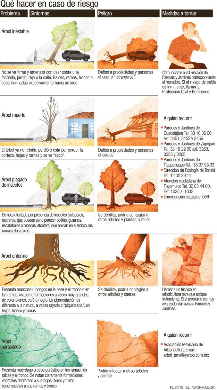 """Responsabilidad mutua en el aviso de arbolado urbano con riesgo estructural en México. """"Quién avisa no es traidor"""". Arboricultura. #TreeRisk #Tree #Árbol"""