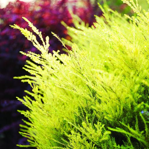 Stock Quote Sun Life Financial: 17 Best Images About Hot Weather Plants On Pinterest