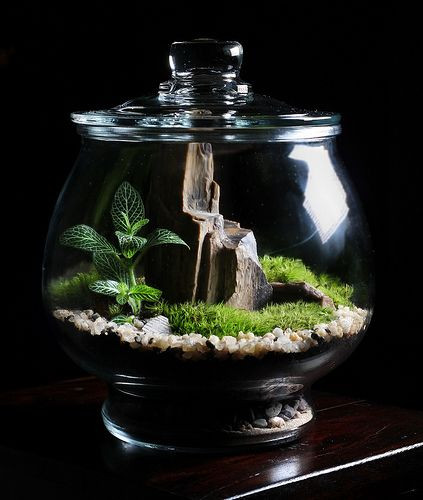 Custom terrarium with petrified wood